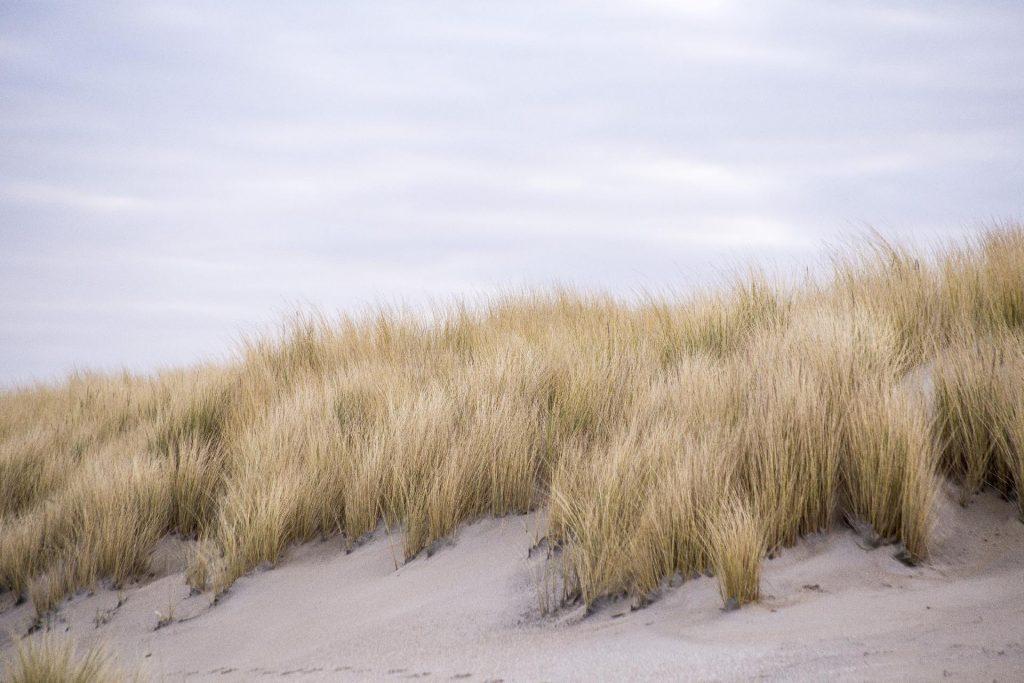 E-scooter huren Noordwijk, duinen en bollenstreek